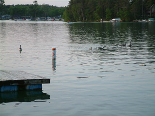 Photo of geese on the lake