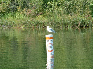 Photo of Seagull on a buoy